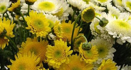3 chợ hoa Hà Nội bạn nên ghé thăm trong dịp Tết