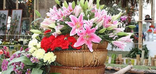 Chơi hoa ngày Tết